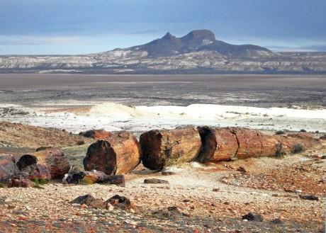 Bosque Petrificado - Foto 4shared.com